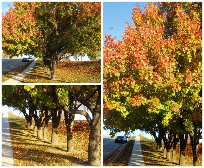 tricolored tree